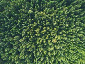 Principales estadísticas andaluzas sobre medio ambiente